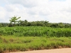 corn-field-across-from-carmelita-gardens-jpg