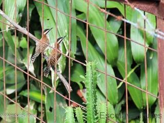 back-yard-birds