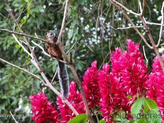squirrel-and-flame-flowers