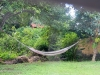 back-yard-hammock