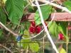 back-yard-hummingbird