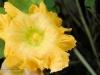 jans-squash-flower