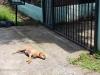 neighborhood-dog-at-our-gate