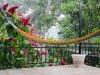 raining-beyond-hammock