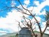 dead-tree-leaning