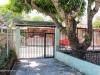 front-yard-mango-tree