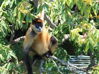 monkey-ready