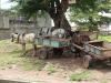 horse-cart-parking-lot