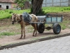 working-horse-cart
