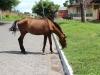 horse-loose-on-street
