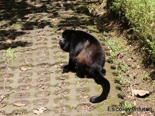 monkey-at-hanging-bridges