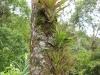 bromeliads-on-tree