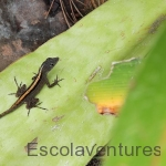colorful-lizard-on-leaf