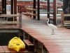 egret-at-ramons-dive-pier