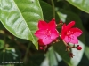 red-pair-of-flowers