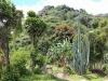 boquete-landscape