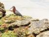 2b-grey-huron-on-the-shore
