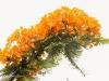 2b-orange-tree-flowers