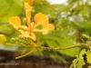 2b-yellow-tree-bloom