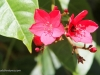 3c-bee-on-red-flowers