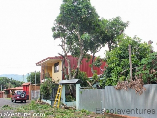 our-mango-tree-gets-trimmed