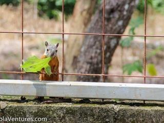 squirrel-in-backyard