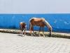 horses-on-granada-street