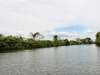 banks-of-the-mopan-riversm-jpg