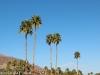 palm-trees-near-palm-springs-california