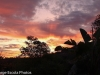 sunrise-in-poway-california