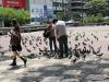 crowd-of-pigeons