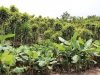 ornamental-plants-for-export