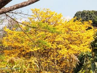 neighbor-tree-in-full-bloom