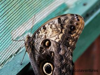 morpho-butterfly-jpg