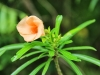 orange-flowersm-jpg