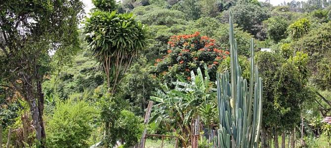 Boquete Panama Living