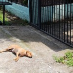 neighborhood-dog-at-our-gate